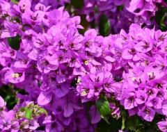 Ap.1 bungalo flowers in garden