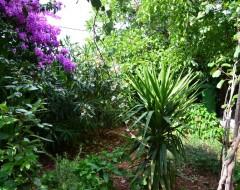 Ap.1 bungalo garden