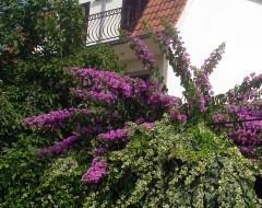 Die Apartment Nena Trogir Kroatien