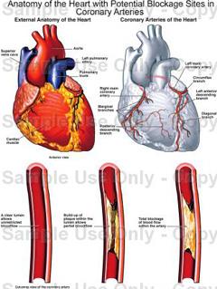 Srce tlak