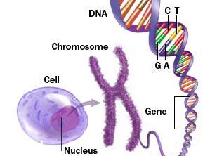 Slika DNA