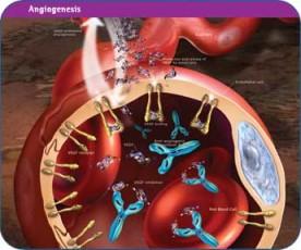Vaskularizacija tumora
